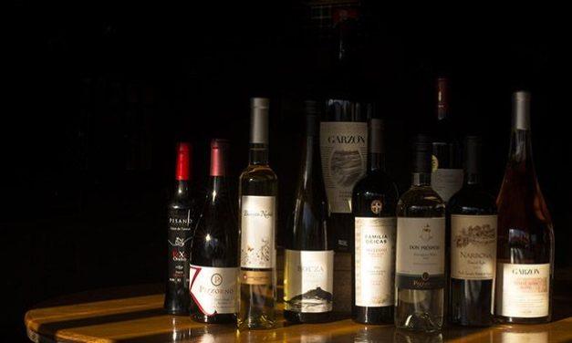 Navegando por los viñedos del Uruguay